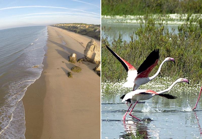 Playas de Doñana | La Marisma